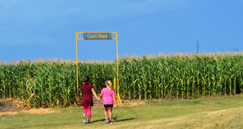 Kids and the Corn Maze